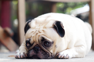 pet odor and stain removal brea