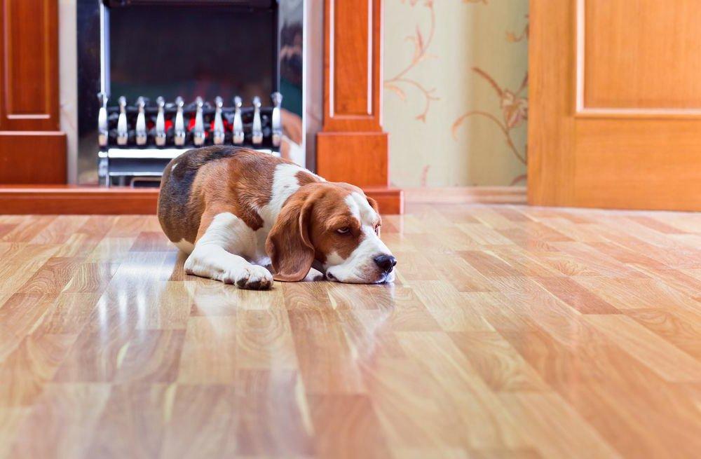 orange county's number one hardwood floor cleaning service